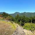 Photos: 熊野古道 小辺路の石畳