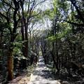 Photos: 牛窓神社の参道階段