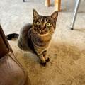 Photos: 漁港につきものの野良猫