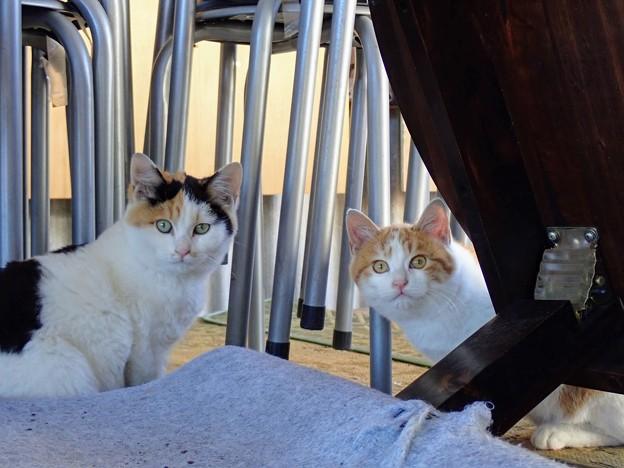 二代目の野良猫たち