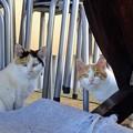 Photos: 二代目の野良猫たち