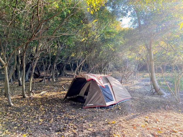 林の中で過ごす野営
