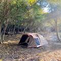 Photos: 林の中で過ごす野営
