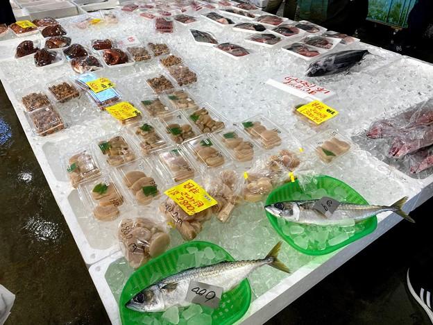 魚好きが大興奮の真魚市