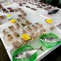 Photos: 魚好きが大興奮の真魚市