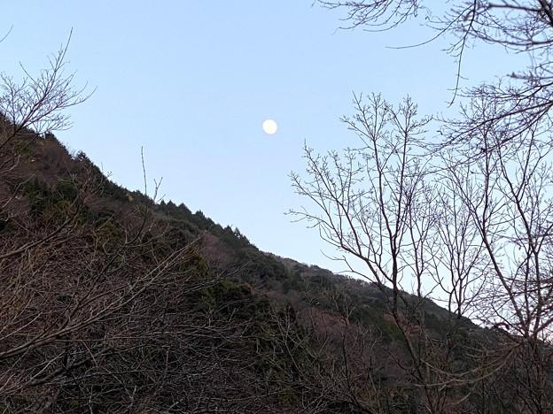 月が上ってきた