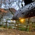 Photos: 雨上がりの朝