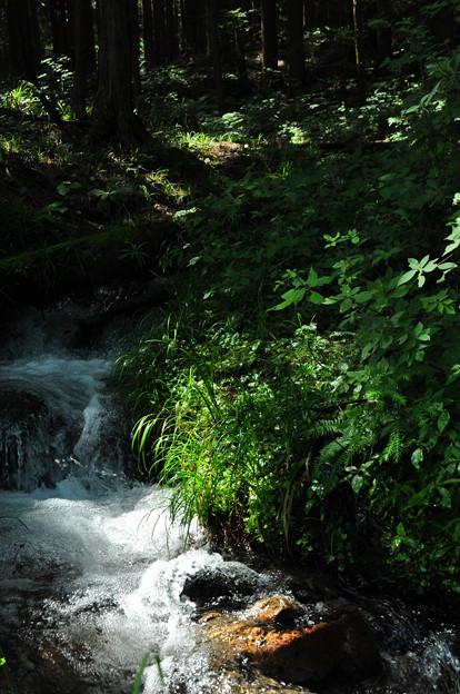 神坂峠の小渓流
