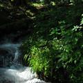 写真: 神坂峠の小渓流