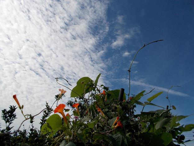雑草の秋空