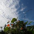 写真: 雑草の秋空