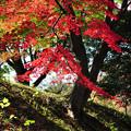 写真: 堤の紅葉
