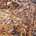 写真: 立春 枯葎の温み