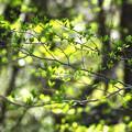 Photos: 新緑躍る