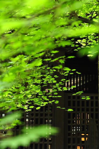 Photos: 平成から令和へ ヤマトタケル由緒の神社の灯
