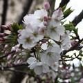 写真: 春の賛美