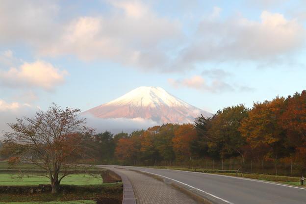 色づく木々と富士