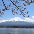 Photos: 春のポップコーン