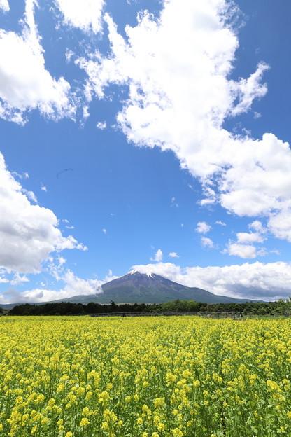 Photos: 夏空とキカラシ