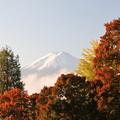 Photos: Sunny彩度アップ