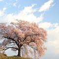 わに塚の桜4/8 その1