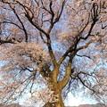 わに塚の桜4/8 その2