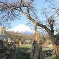 Photos: 忍野春景1