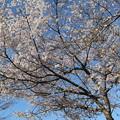 Photos: 忍野春景2