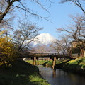 Photos: 忍野の春3