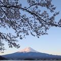 桜咲く河口湖1