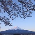 Photos: 桜咲く河口湖2