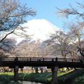 Photos: 忍野の春5