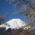 Photos: 忍野の春6