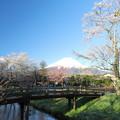 Photos: 忍野の春7
