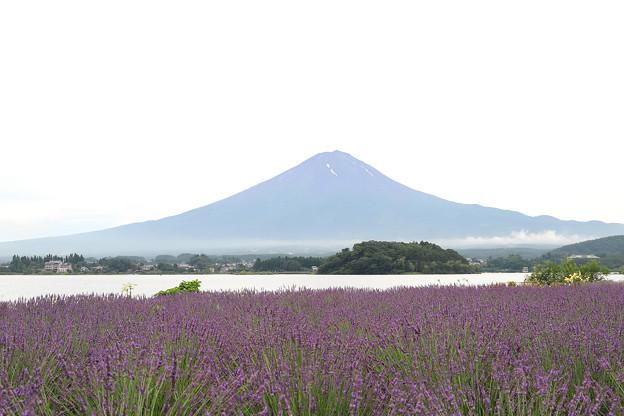 Photos: 富士とラベンダー