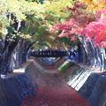 Photos: もみじ回廊