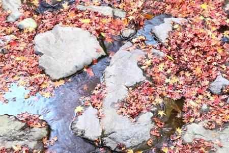 秋色の小川