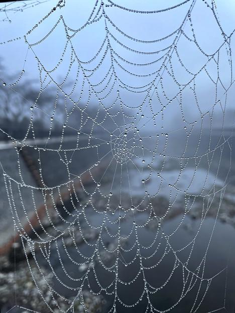 Photos: 蜘蛛の巣ジュエリー