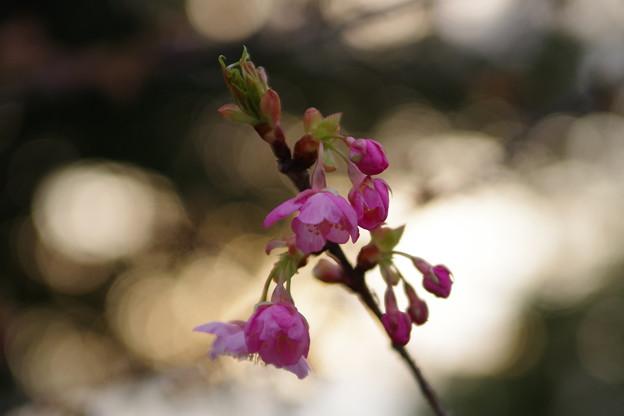 「倉敷川から春を待つ」