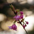 写真: 「倉敷川から春を待つ」