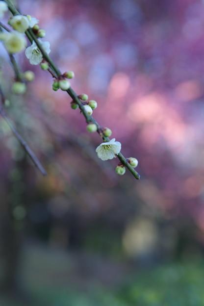 「待ちわびて・・・春。」