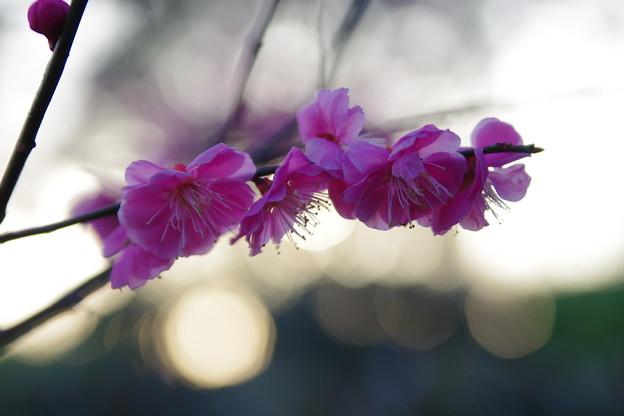 「三月の思い出」