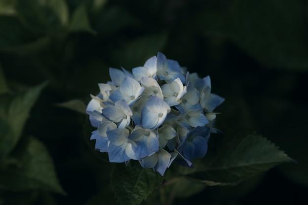 Photos: 「IN・BLUE」