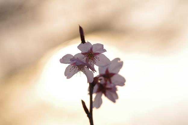 「春色と黄昏と」