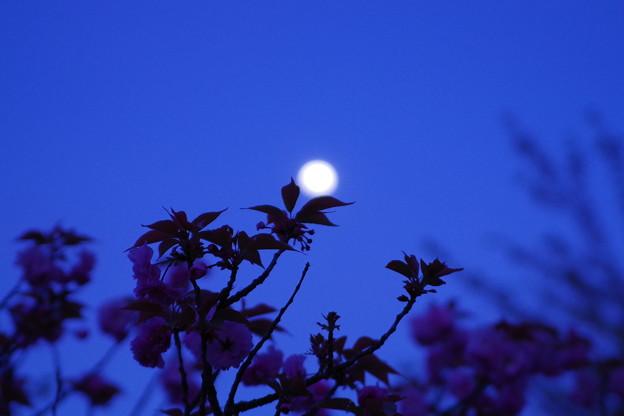 「月夜に誓う」
