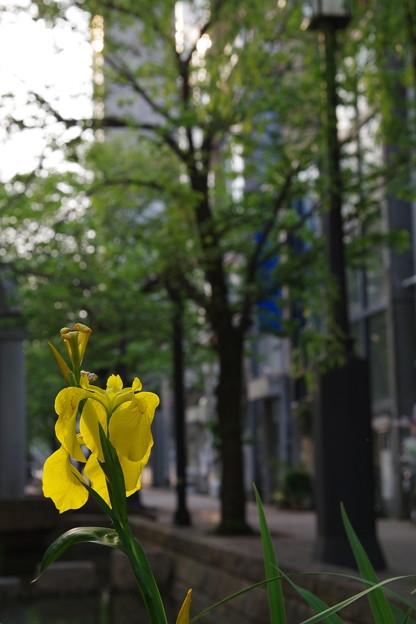 「Yellow street」