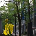 Photos: 「Yellow street」