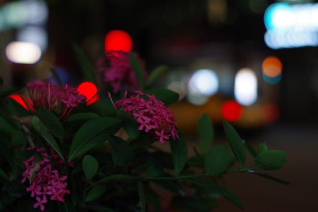 「夜に花。心に灯。」