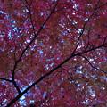 「秋日傘」