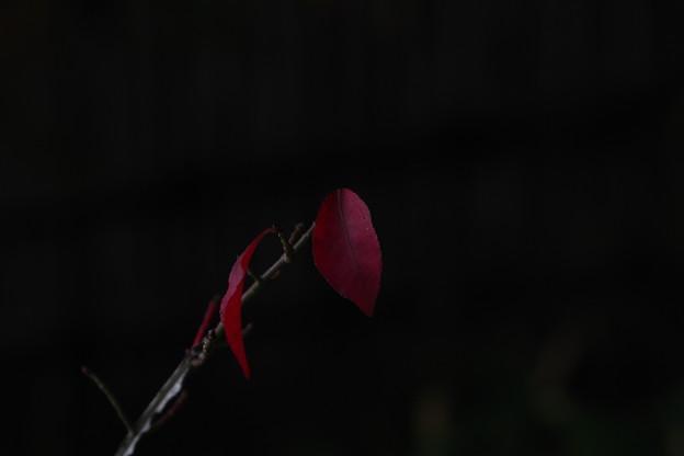 「鼓動する紅の闇」